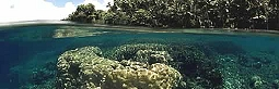 coral_reef_protection